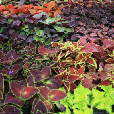 How to duplicate your plants