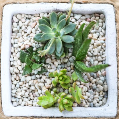 How to Create a Successful Succulent Planter, PLUS DIY: Take an Old Planter, Make it NEW!